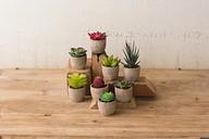 Miniature Succulents (Set of 8), Multi