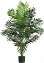 Home Accent 5' Paradise Palm Tree with 12 Lvs, Green