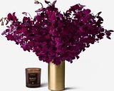 Cabernet Dendrobium Cut Orchid