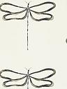 Scion Dragonfly Wallpaper