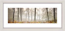 Mike Shepherd - Morning Woodland Framed Print, 52 x 107cm