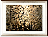 Mike Shepherd - Lillies Framed Print & Mount, 85 x 111cm