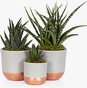 The Little Botanical Desk Buddy Plant Gang