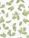 Galerie Fossil Leaf Toss Wallpaper