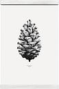 Paper Collective Nature 1:1 Pine Cone poster, white