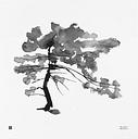 Teemu Järvi Illustrations Pine Tree poster, 50 x 50 cm