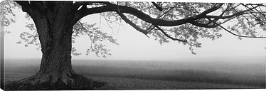 'Tree in a Farm, Knox Farm State Park, East Aurora, New York State, USA' Photograph on Wrapped Canvas