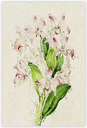 'Illustration of Pink Dendrobium Orchids' - Unframed Painting Print on Paper East Urban Home