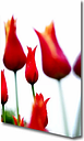 Red Fire Tulip Field Flowers Canvas Print Wall Art East Urban Home Size: 142.2 cm H x 101.6 cm W