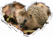Little Hedgehog Wall Sticker East Urban Home