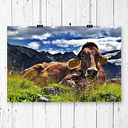 'Resting Cow on the Alps Landscape' Photographic Print