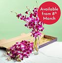 Letterbox Pink Dendrobium Orchids